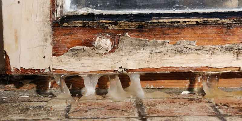 Does Mold Attract Bugs nashville, tn
