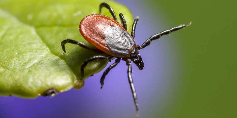how-to-remove-ticks-from-your-yard nashville, tn