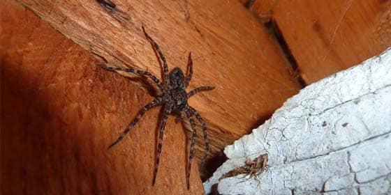 spider identification nashville, tn